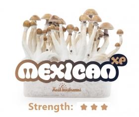 Comprar Mexican xp 100 % micelio cultivo de setas de la risa