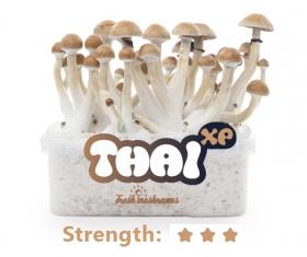 comprar Pan de setas Thai cultivo setas alucinógenas
