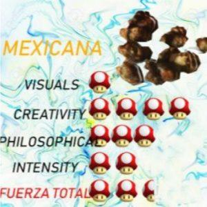 comprar TRUFAS mágicas mexicanas baratas