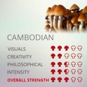 Kit De Cultivo De Setas Alucinógenas Cambodian Cubensis
