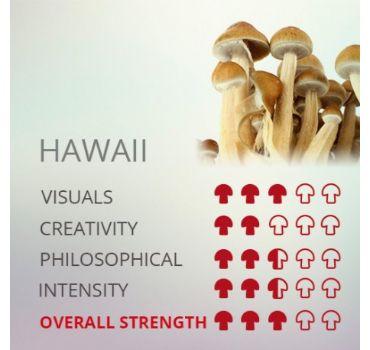 Kit De Cultivo De Setas Alucinógenas Hawaii Cubensis
