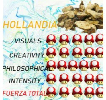 precio TRuFAs magicas HOLLANDIA en oferta