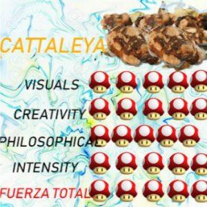 comprar TRuFAs magicas-CATALEYA alucinogenas