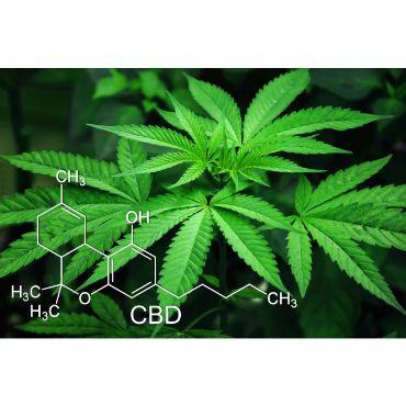 comprar CBD medicina Al mejor precio)
