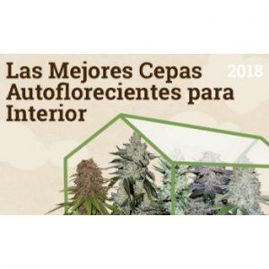 Bancos Semillas de Marihuana Auto Florecientes