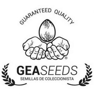 Banco Gea seeds Auto florecientes